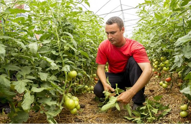 COVID-19 causes havoc to supply chains for fresh fruits and vegetables