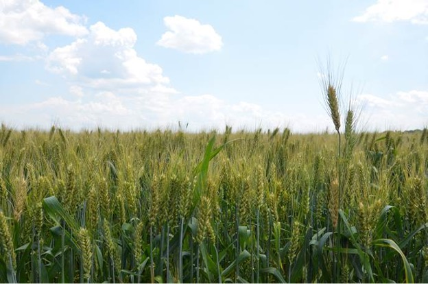 FAO stands ready to provide technical support for Ukraine