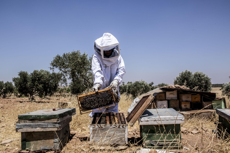 Всесвітній день бджіл: ми можемо відбудувати найкраще для бджіл